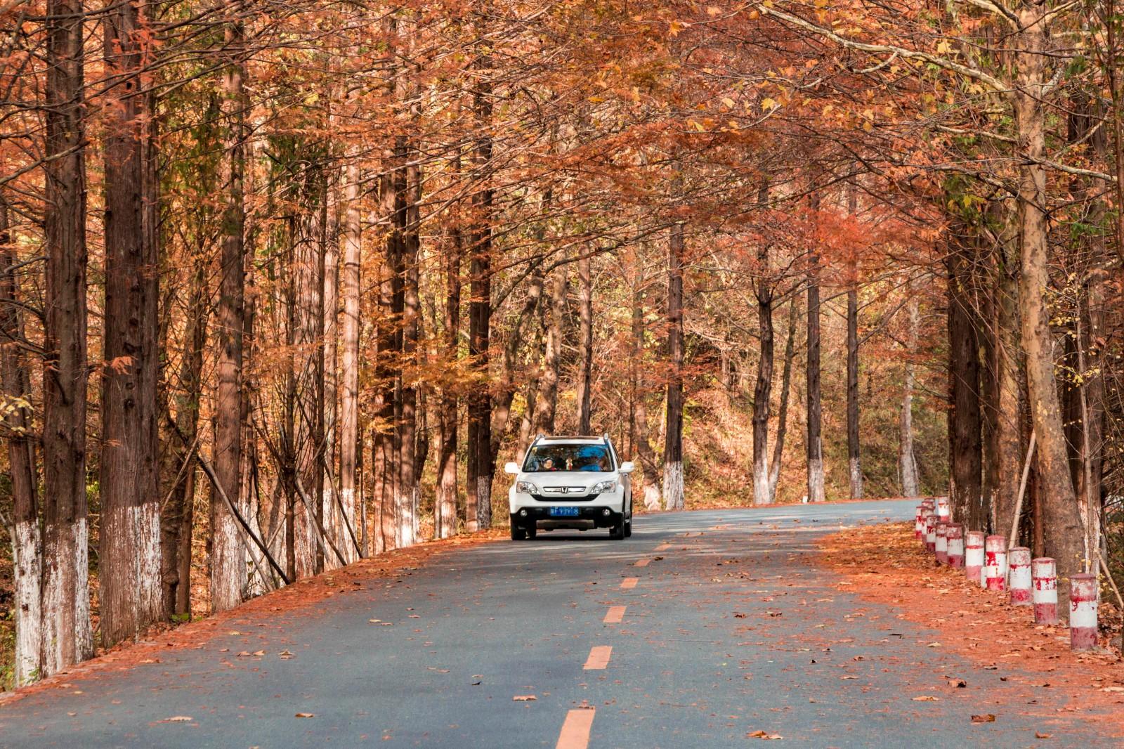 【年末去哪玩】自驾秦岭南坡秘境,看遍汉中最美秋景