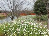 花开海上生态园