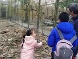 上海野生动物园成人双人票