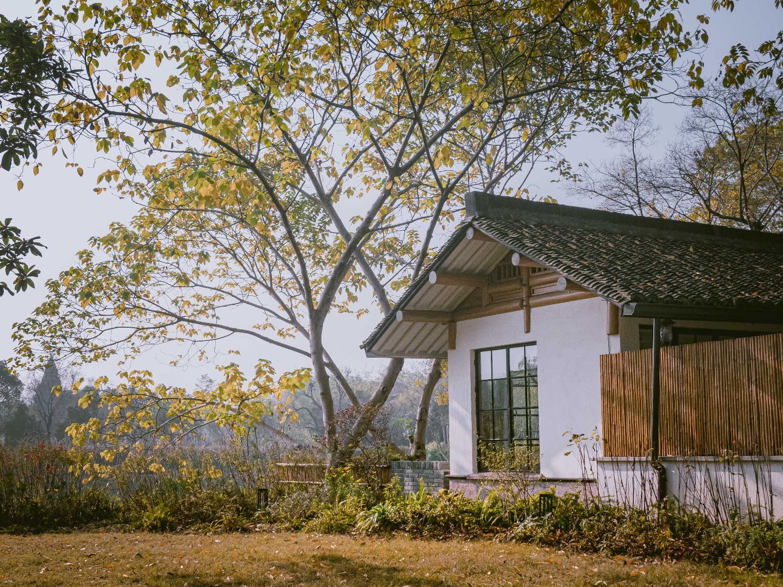 走进西溪十里芳菲度假村落,感受这无比温暖的初冬