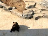 南京金牛湖野生動物王國