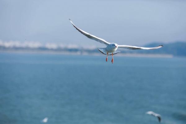 冬天来鼋头渚观鸟,与来自西伯利亚的精灵们,邂逅在无锡太湖