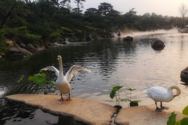 【新年輕度假】北京超小眾攝影藝術館,日落時分拍天鵝超美!