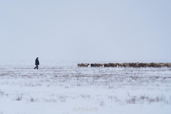 冬游新疆,你是我們夢回牽繞的遠方