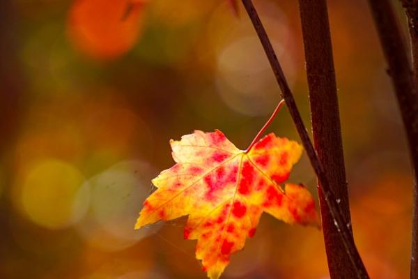 【新年輕度假】北京也有北美紅楓?!絕美小眾旅游地昌平沙河水庫秋游指南
