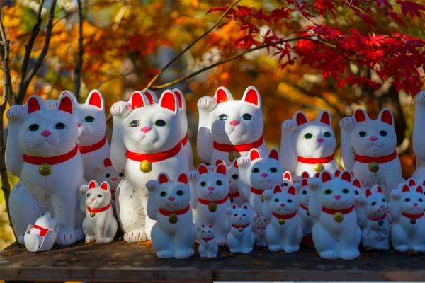 【新年輕度假】東京絕美小眾賞楓圣地;有招福貓的豪德寺參拜體驗