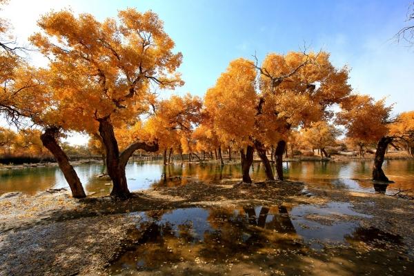 """大漠胡楊林,內蒙古最西端大漠深處的奇觀,被譽為""""大漠明珠"""""""