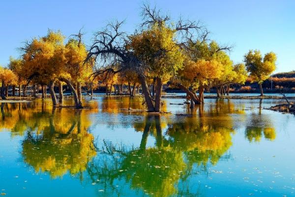 一组照片告诉你:这处让央视多次取景的大漠胡杨林,究竟有多美!
