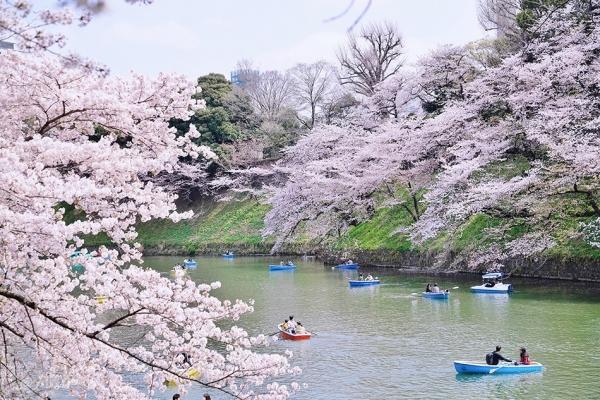 【日本】东京探店:各种美貌的樱花限定!