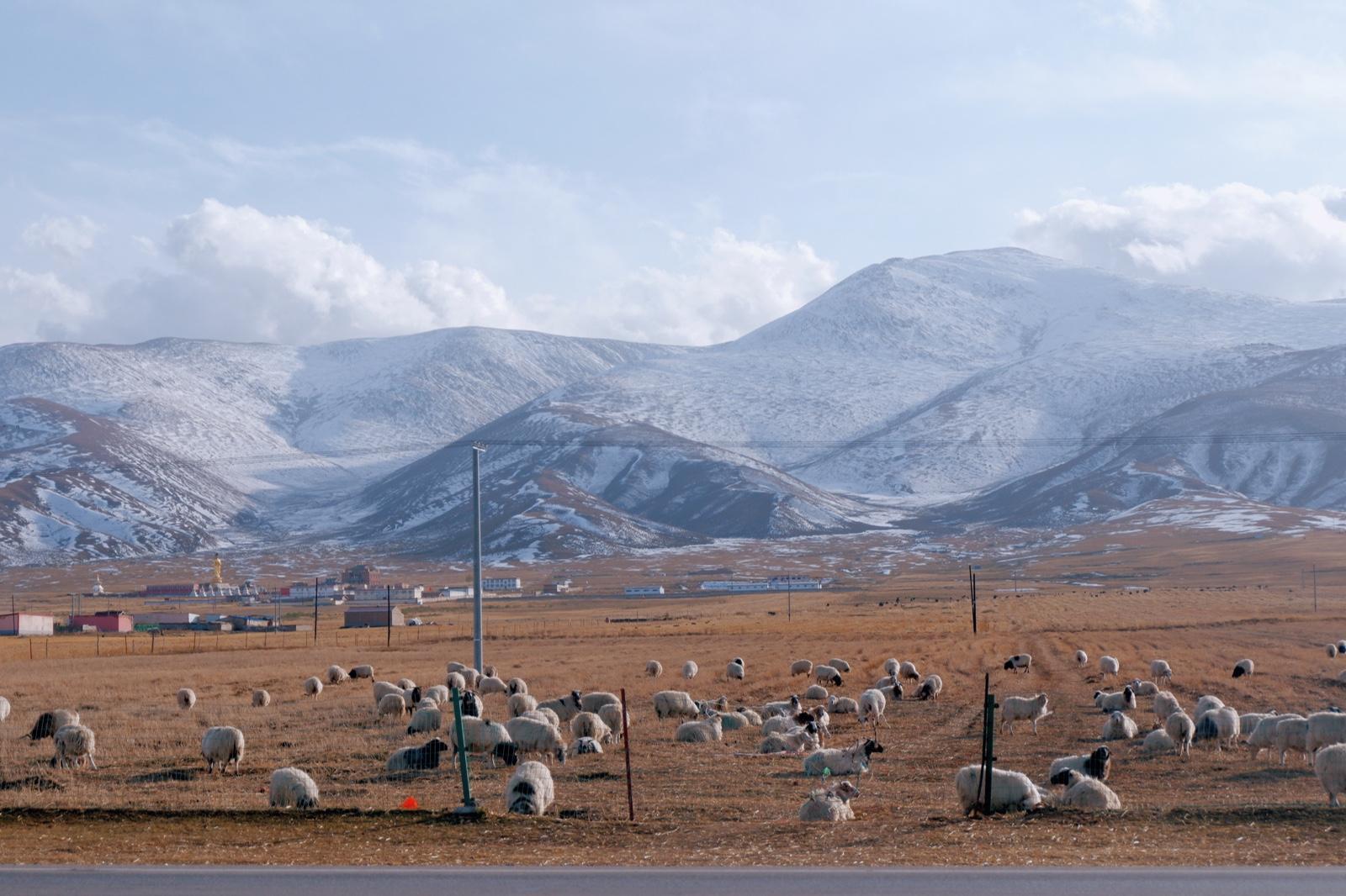 西北游记/冬季徒搭青海湖,与雪山羊群作伴【附实用攻略+小众景点+路线图】