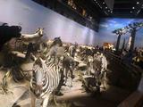 上海自然博物馆