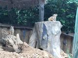 青岛森林野生动物世界