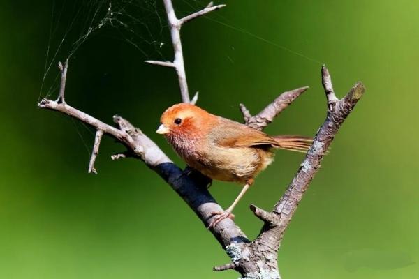 研学腾冲丨以观鸟之名,投身高黎贡山感受最纯净的生命力
