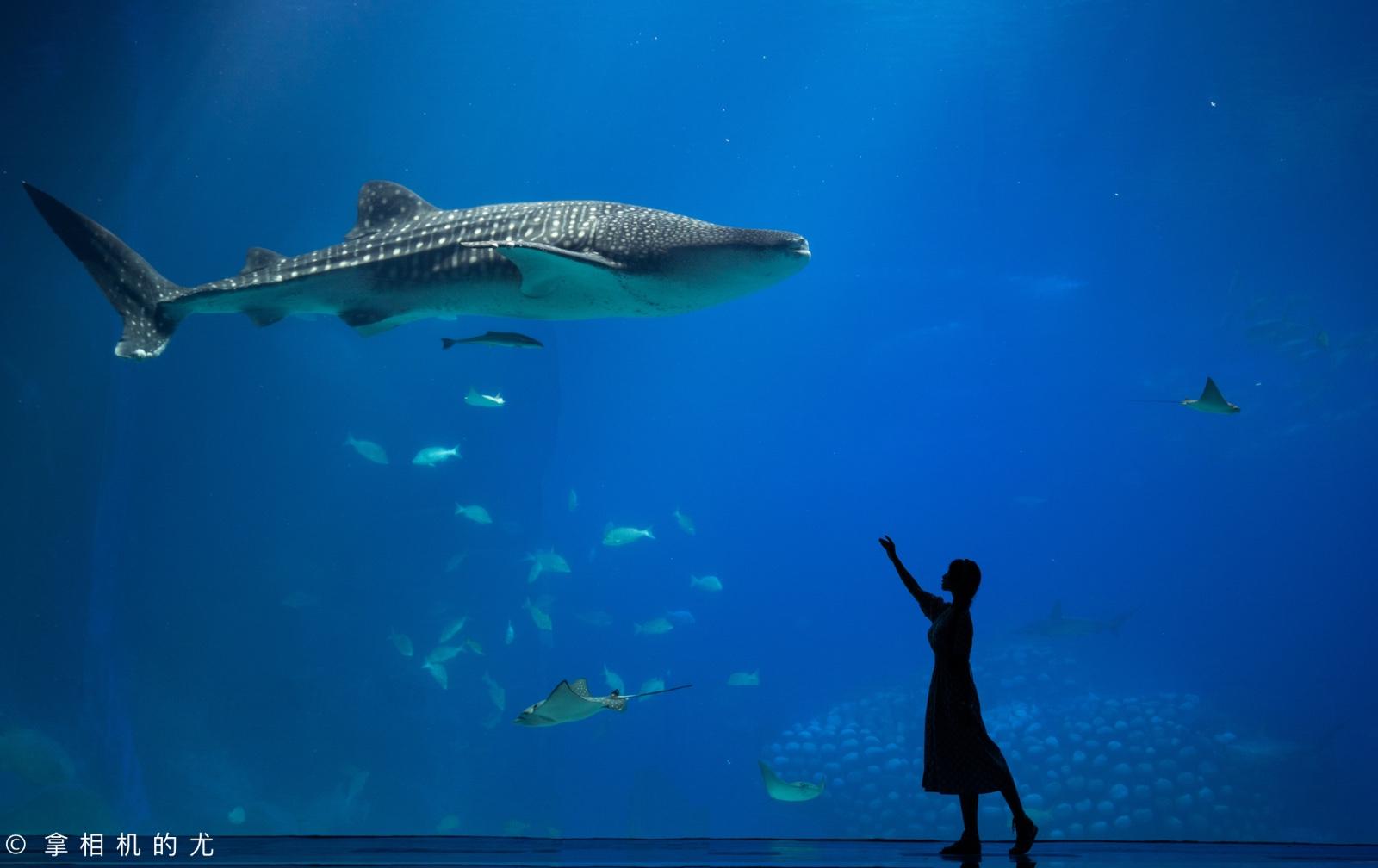 珠海横琴岛,我喜欢的样子你都有(含详细攻略)