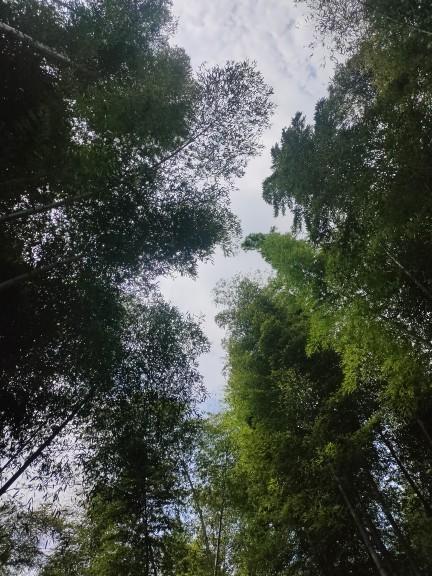 天目湖南山竹海