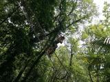 重庆飞越丛林户外探险乐园(歌乐山)