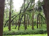 泰州兴化李中水上森林公园