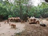 广州长隆野生动物世界