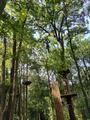 南京紫金山探险公园
