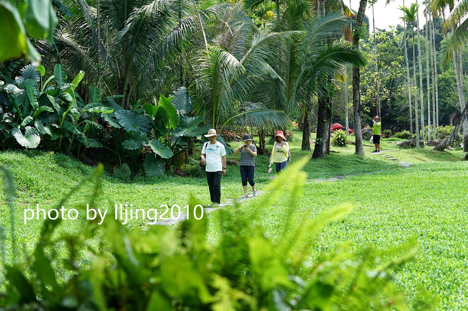 【海南寶藏攻略】吃黎家美食、穿越鉆石級熱帶雨林