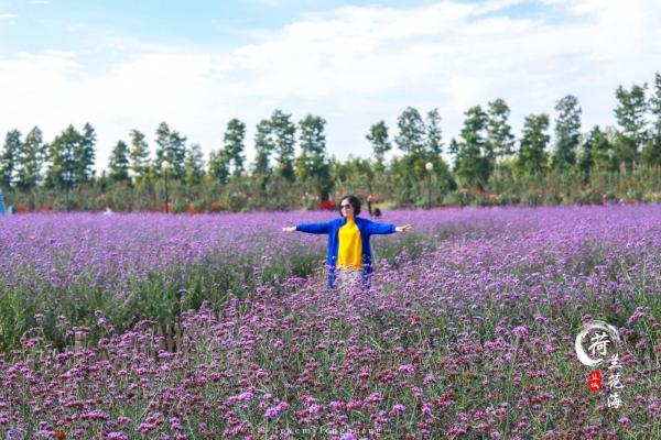 江苏盐城|感受东方湿地之都,走进仙鹤神鹿世界