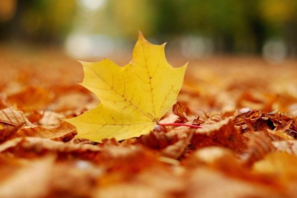抓紧赏深秋的美景吧!不然错过还要再等一年