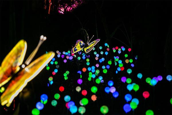 广州周边游|冬游森波拉,在远古森林的皇宫里,体验森境光影的美轮美奂