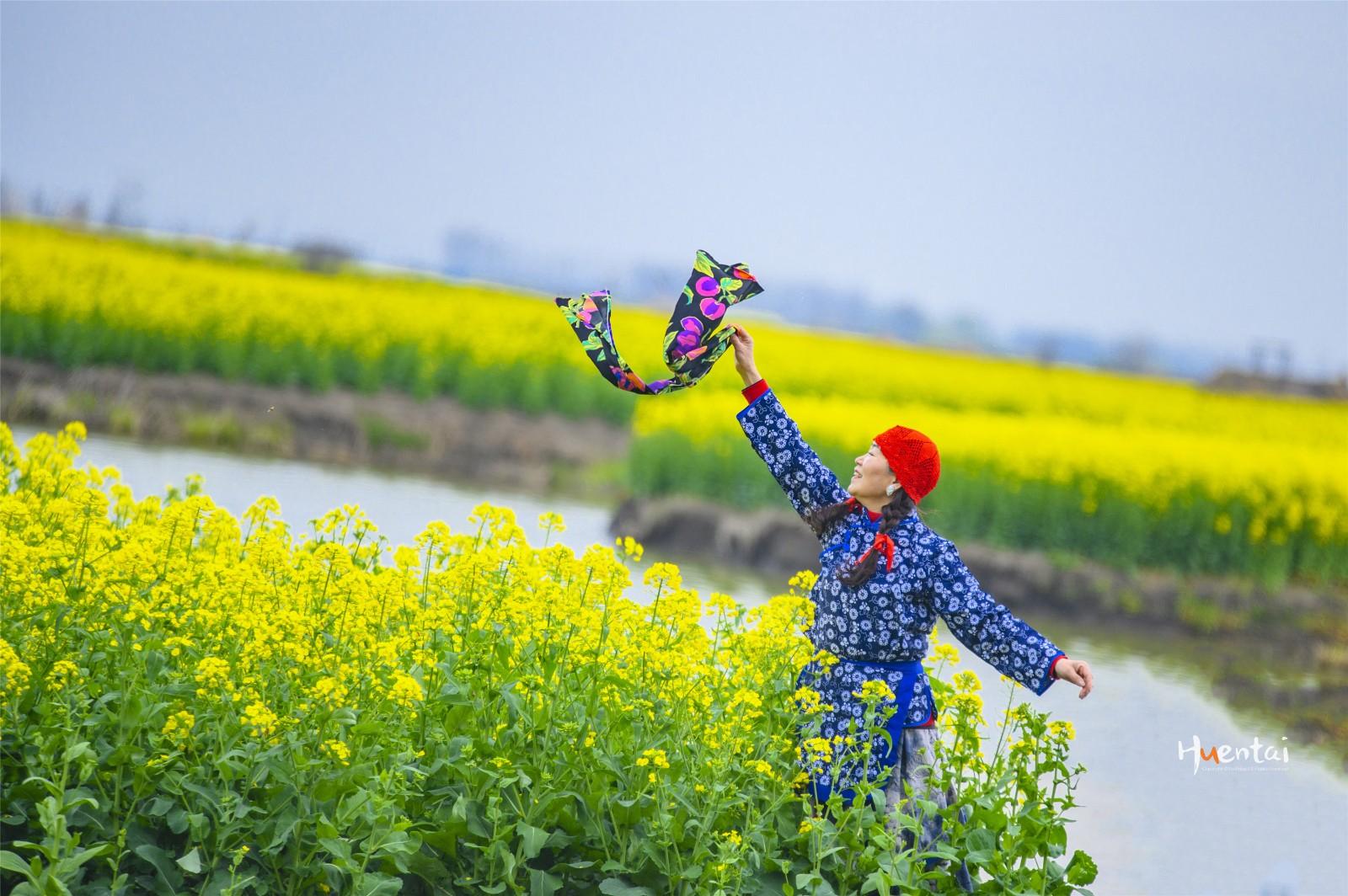"""春日里奔赴兴化,只为""""全球四大花海""""中的那抹黄"""