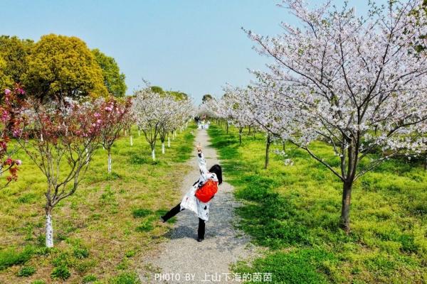 江浙沪观潮赏樱攻略:走进春天里的海宁盐观,感受诗情画意