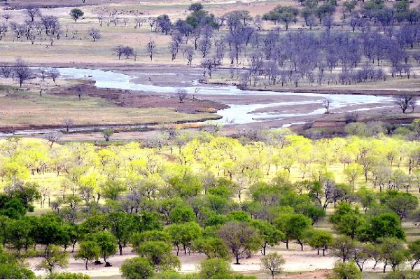 【云慢疏林大草原】坝上草原秘境,京北香格里拉,中国的马赛马拉!