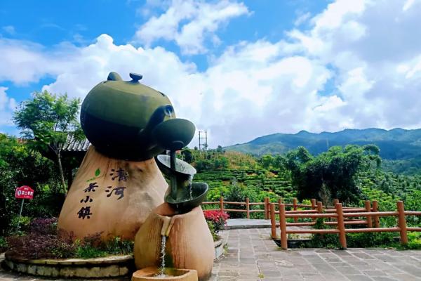 在腾冲茶山上漂流的幸福时光