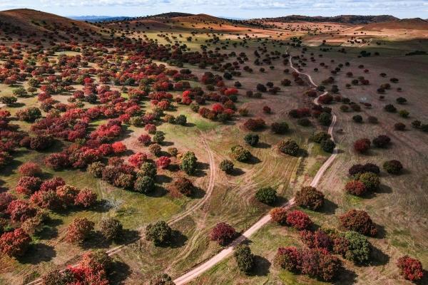 去了兴安盟才知道:阿尔山的秋有多金黄,五角枫的秋有多红艳!