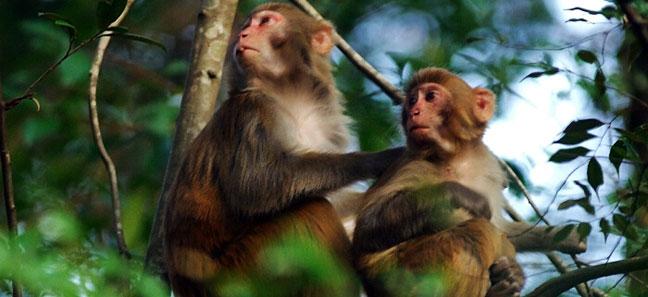 营业时间 主      题 动植物园  景区描述 牛姆林是在闽南地区保留 图片